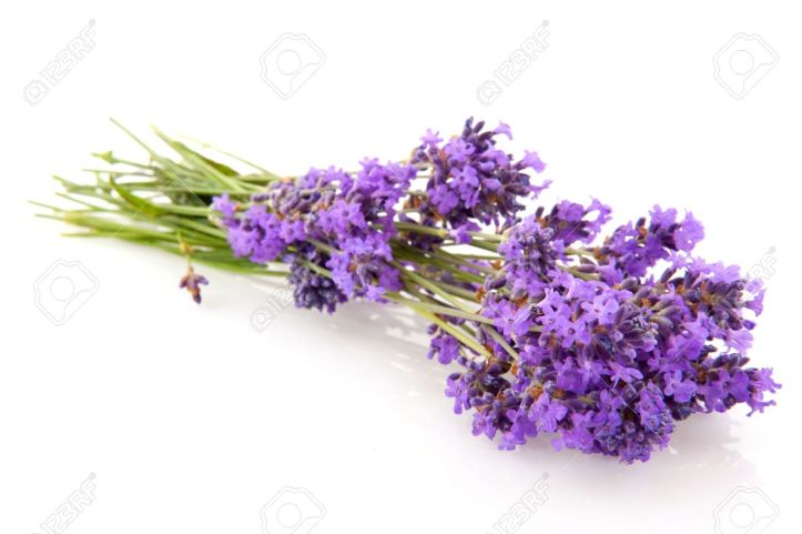 5199378-bouquet-lavender-flowers-isolated-over-white-stock-photo